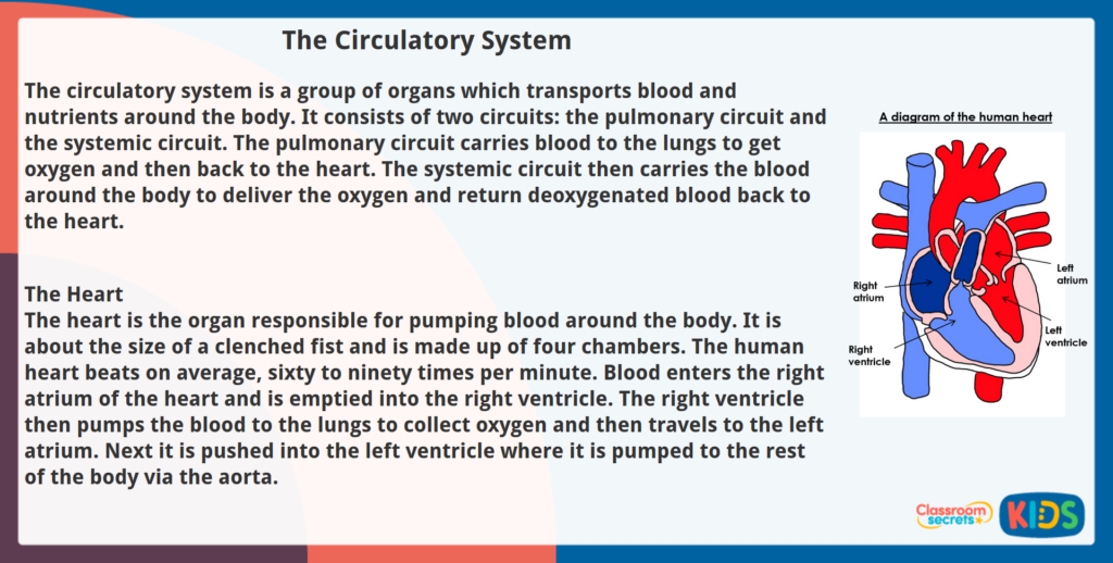 Year 5 Non-Fiction Reading Comprehension The Circulatory System